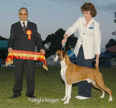 Winning Intermediate in Show at Dalwood International SHow Date, under International All breeds Judge Mr Mario Magsaysay (Phils) age 23 months.