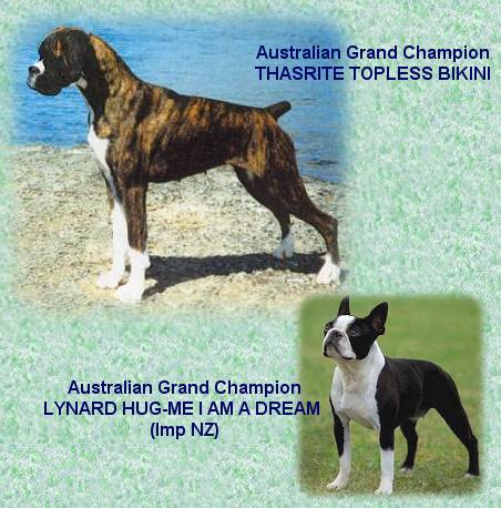 Aust.Grand Ch.Thasrite Topless Bikini and Aust.Grand Ch.Lynard Hug-Me I Am A Dream (Imp NZ)