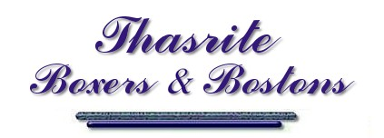 Thasrite Boxers and Bostons