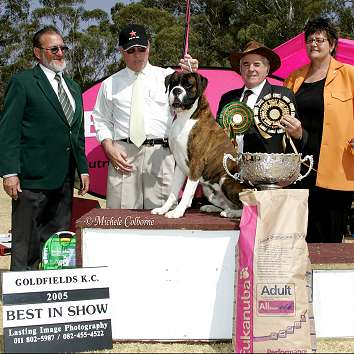 SA CH/AustGrand Ch Thasrite The New Yorker wins BIS Goldfields KC South Africa