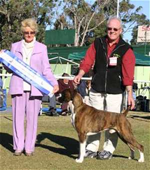 Grand Ch Thasrite The New Yorker wins back to back Best Exhibit in Show - Lake Macquarie Kennel Club - June 2004.